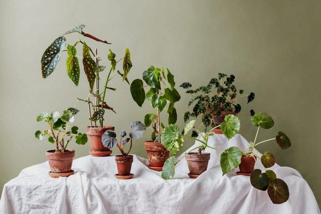 Plant Life Balance: o app que te mostra quais plantas deixam seu lar mais harmonioso